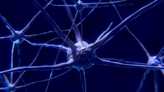 Study Uncovers Molecular Mechanism of Nerve Cell Degeneration ...